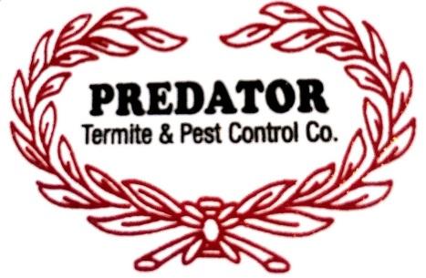 predator art work